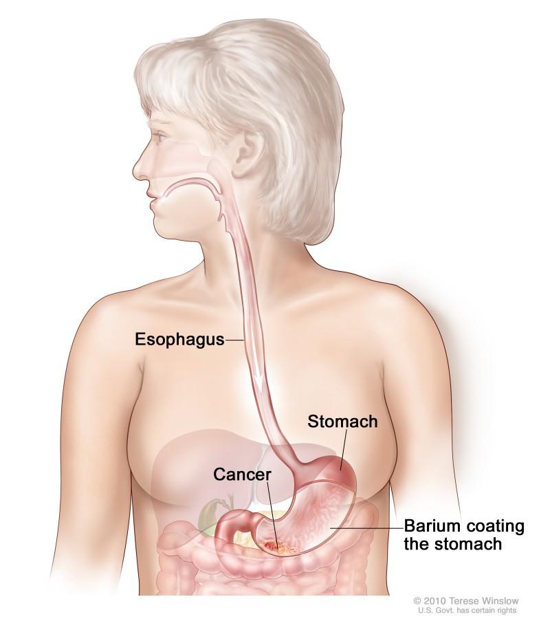 Anatomie van de lever